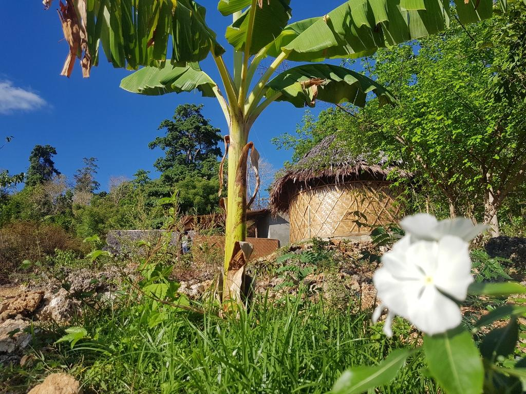 garden in Little Nomads Eco-guesthouse, Siquijor